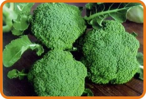 新鲜蔬菜配送-西兰花