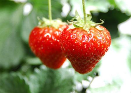 草莓宜冲洗不宜浸泡