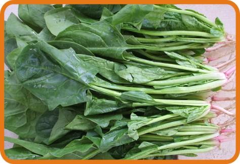 新鲜蔬菜配送-菠菜
